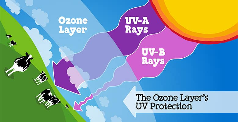 ozone-uva-uvb-graphic