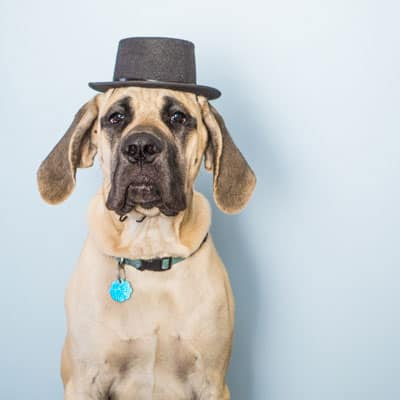 Artie the Dapper Dog