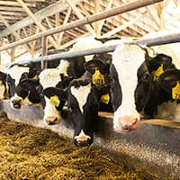Our Caring Dairy Program is Working Toward a Sustainable Future for Dairy