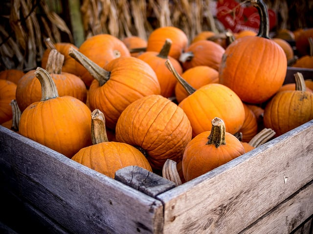 A large crate of pumpkins