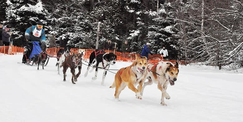 Dogsledding at Little River State Park - Ben & Jerry's