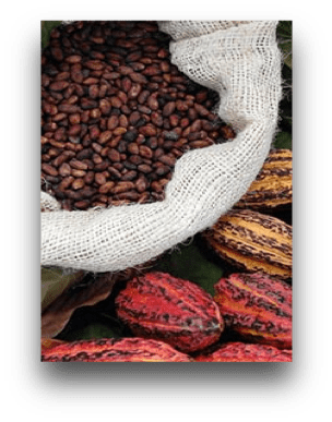 A sack of cocoa beans